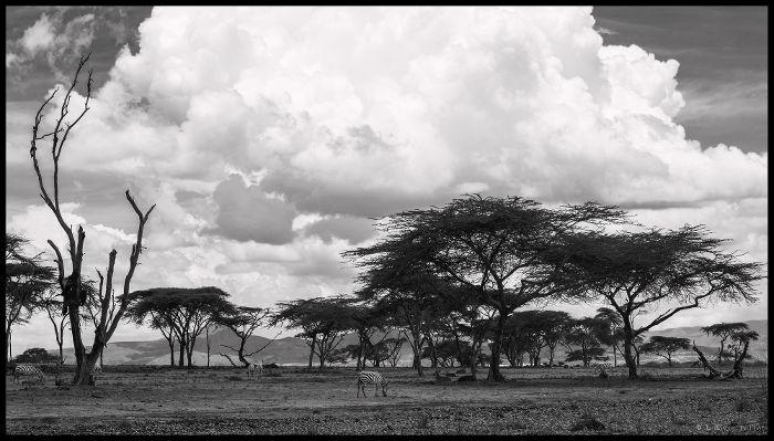 savane_kenya